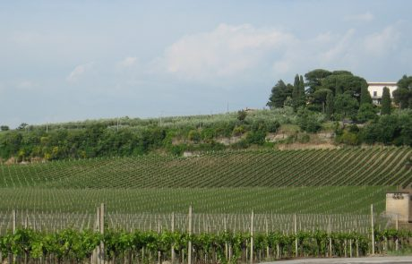 the rolling hills of the castelli romani, frascati in particular, planted with vineyards