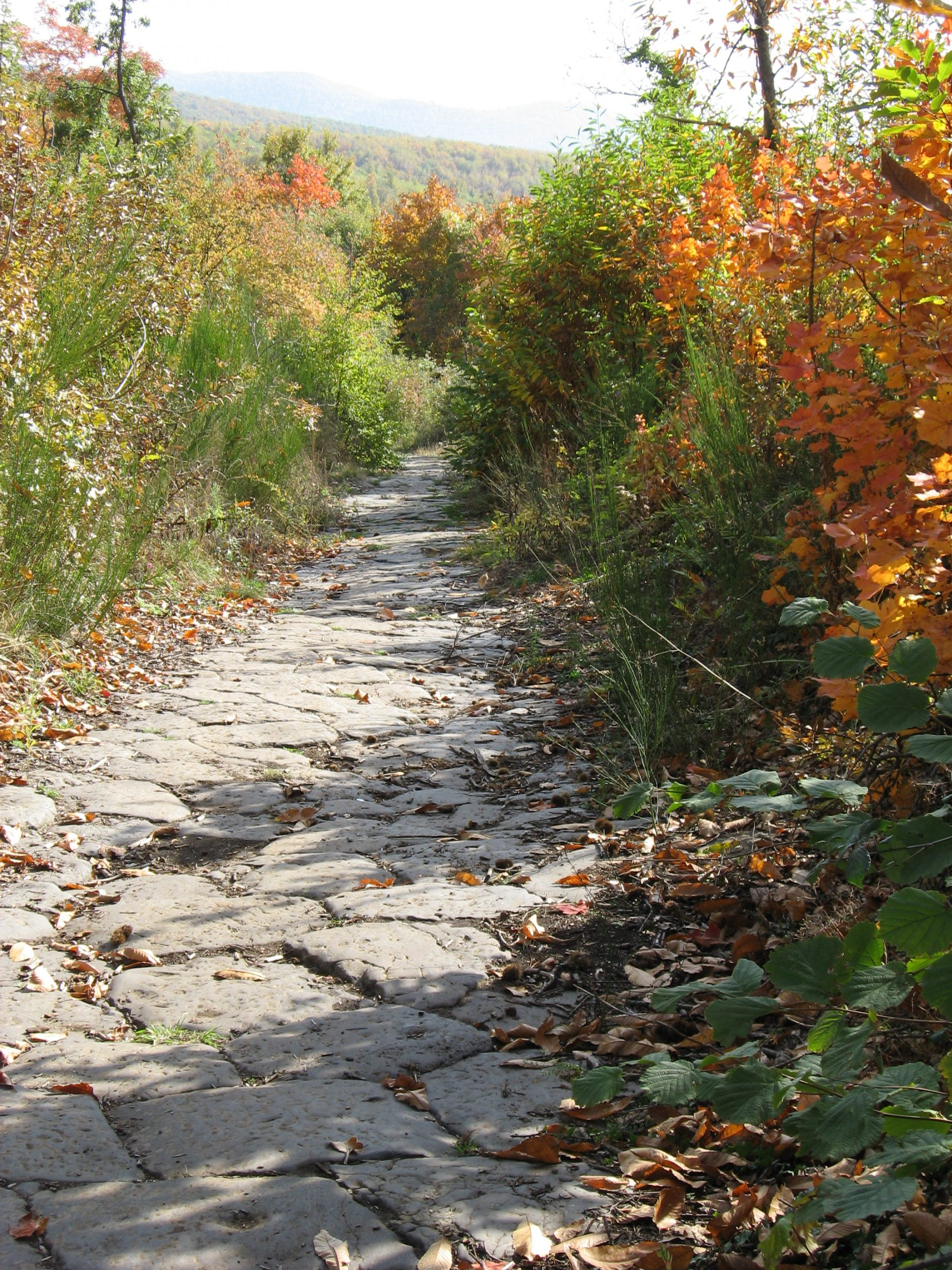 the via triumphalis, an ancient Roman road, that goes up Monte Cavo in the Castelli Romani
